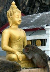 buddha-monkey2