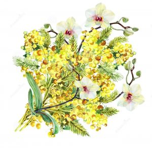 mimoza-buketa-orhi-eya-i-smychok-akvare-50504490